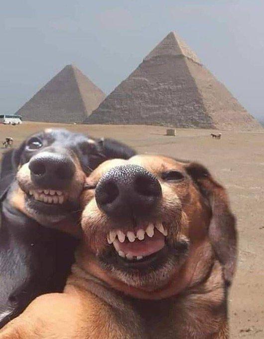 El por sus obras los conoceréis ha pasado a ser por sus selfies los conoceréis