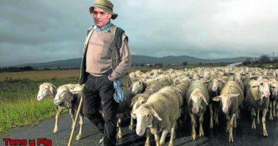 Popurrí de Zarzuelas dedicado al jefe lechón del pueblo lanar. Ilustración de Tano y Pig