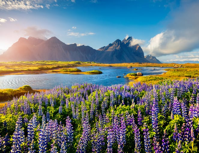 טיול מאורגן לאיסלנד - IC