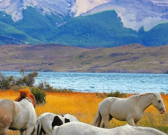 טיול מאורגן לצ'ילה