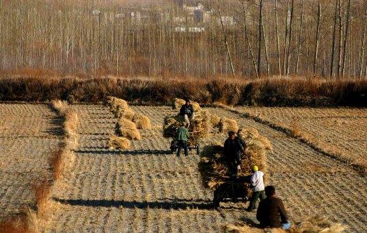 China_Harvest