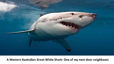 Sharkie2