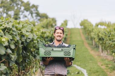 28352094_shutterstock_grape picker