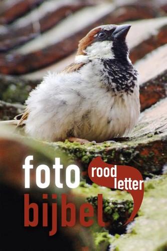 Fotobijbel (Hardcover)