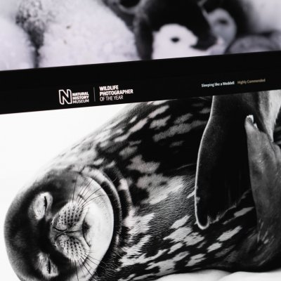 Read the Natural History Museum case study