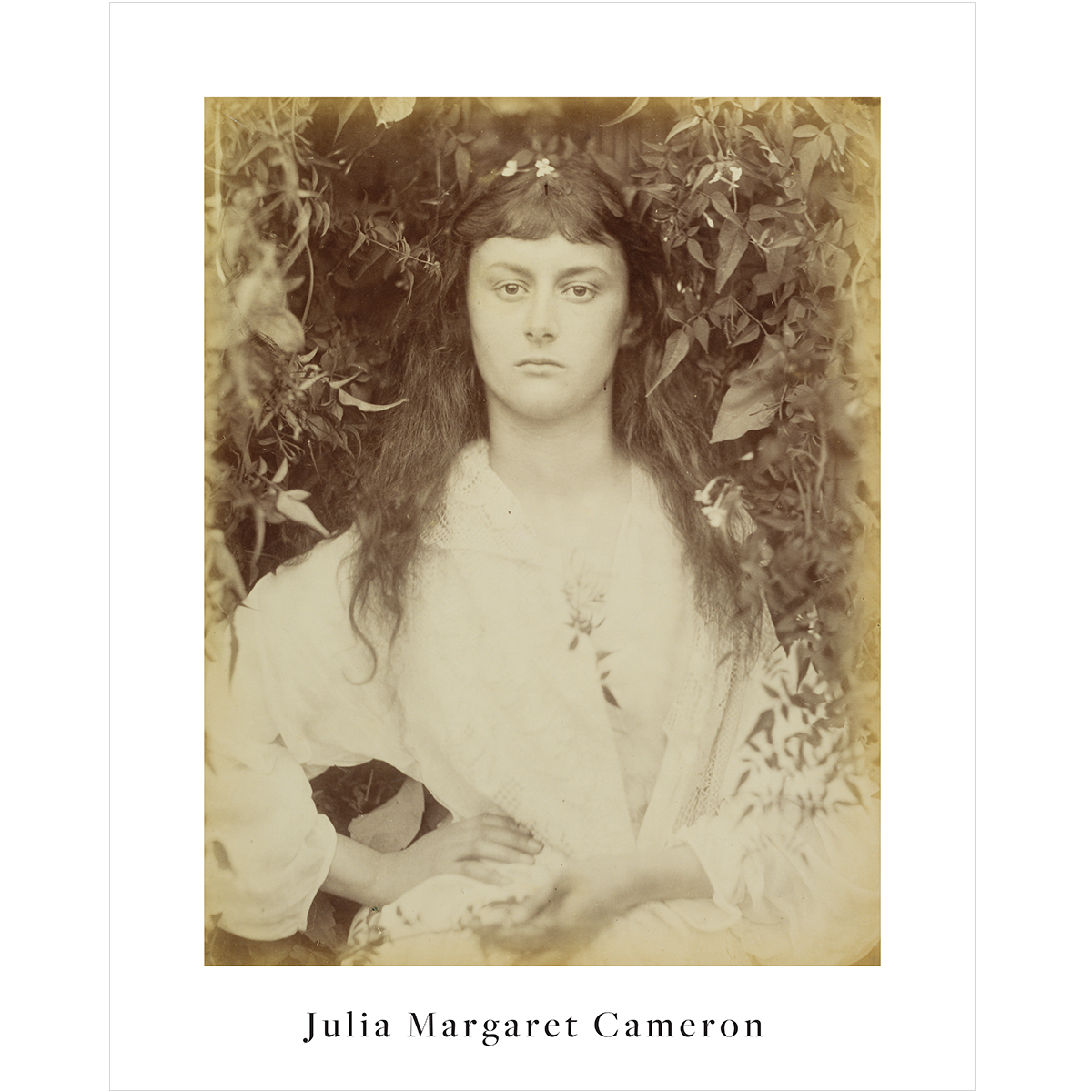 V&A Julia Margaret Cameron print
