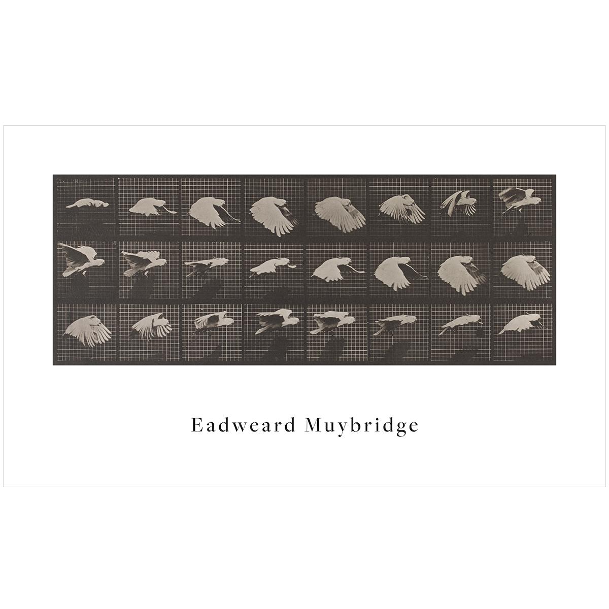 V&A Eadweard Muybridge print