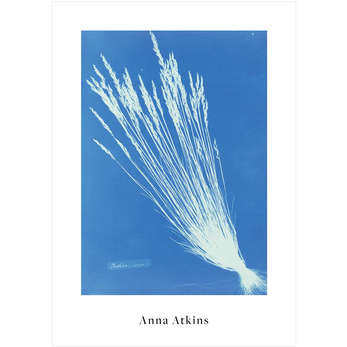V&A Anna Atkins print