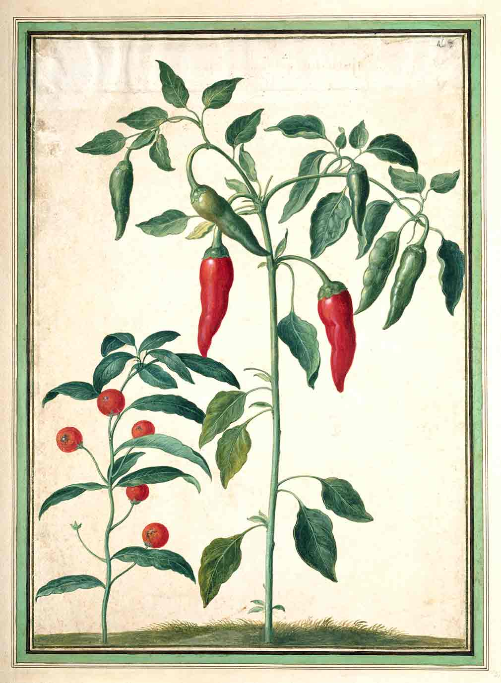 Red Peppers and Capiscum from Horti Itzeinensis (custom print)