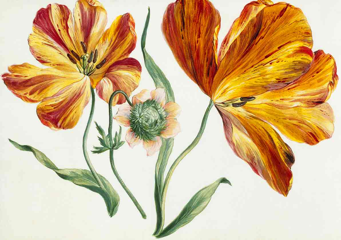 Flowers with large orange petals, flower study (custom print)