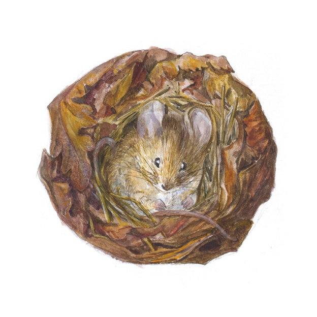 A mouse in its nest (custom print)