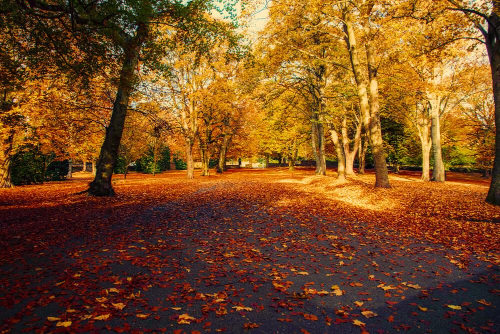 Lister Park in Bradford