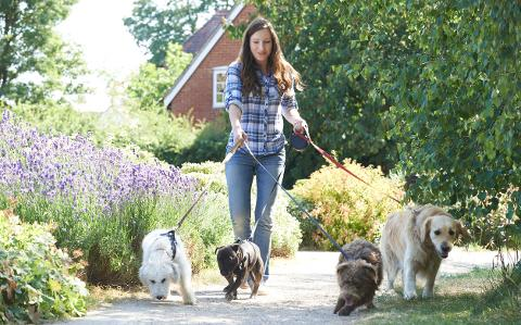 Councils signing up to green dog walking scheme
