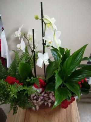 Commande bouquets Morancez fleuriste O'ré des Fleurs