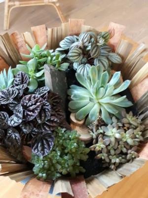 Faire livrer bouquet de fleurs Tremeven fleuriste Akène Fleuriste Créatrice