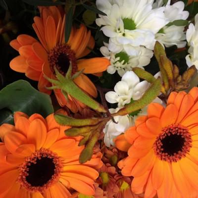 Livraison bouquets fleur Montpellier fleuriste Les Jardins de la Fontaine