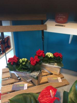 Envoie de bouquets fleur Plouguerneau  Aux Fleurs Des Abers