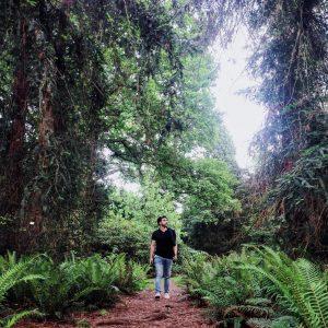 Kew Gardens Woods
