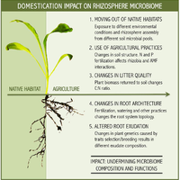 Impact of plant domestication on     preview & related info