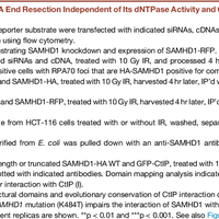 SAMHD1 Promotes DNA End Resection    preview & related info | Mendeley