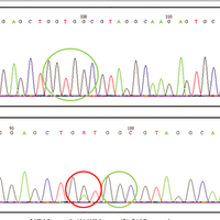 Kras And Braf Mutational Status I Preview Related Info Mendeley