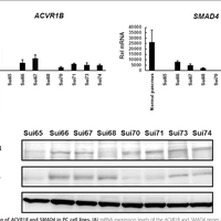 Homozygous deletion of the activi    preview & related info