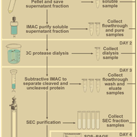 High-throughput protein productio    preview & related info