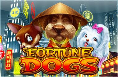habanero - Fortune Dogs