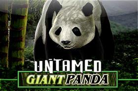 microgaming - Untamed - Giant Panda