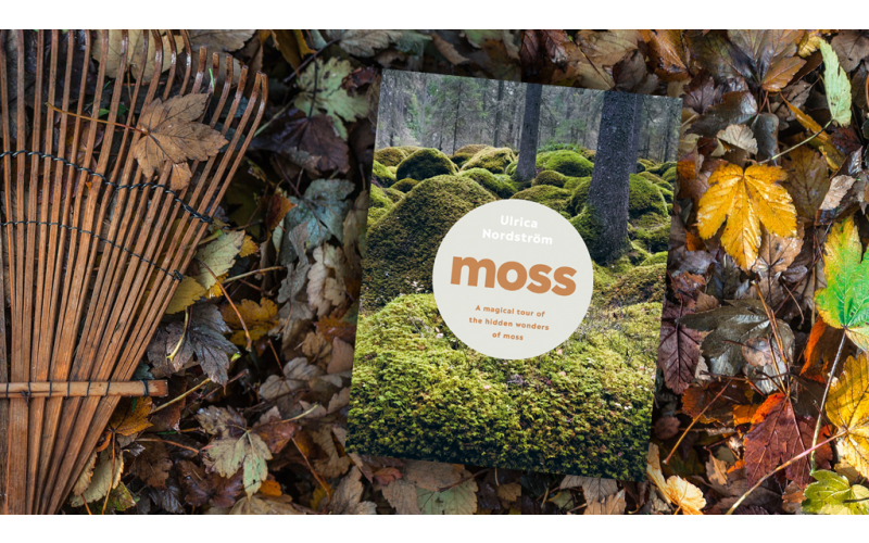 A copy of Moss by Ulrica Nordström