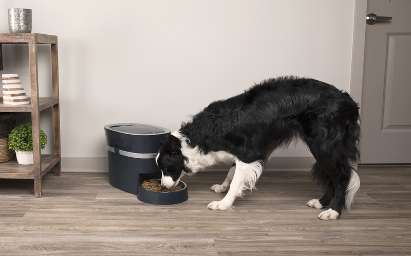 Win a PetSafe® Smart Feed Automatic Pet Feeder
