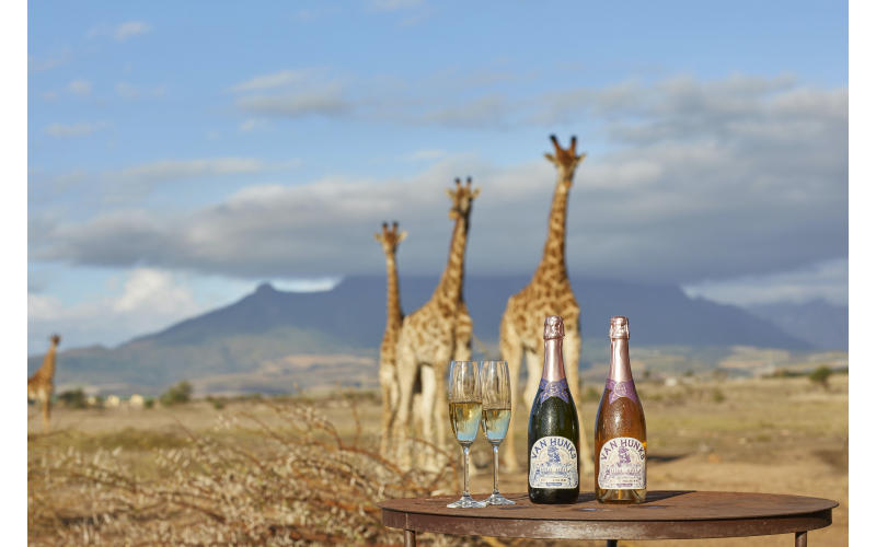 Win a Year's Supply of South African Van Hunks MCC Sparkling Wine
