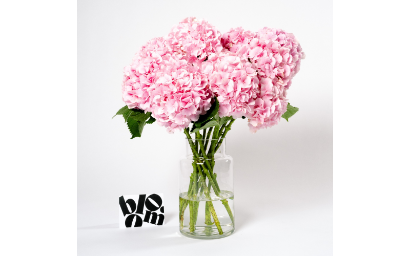 Win a 6-month Bloom flower subscription worth £250
