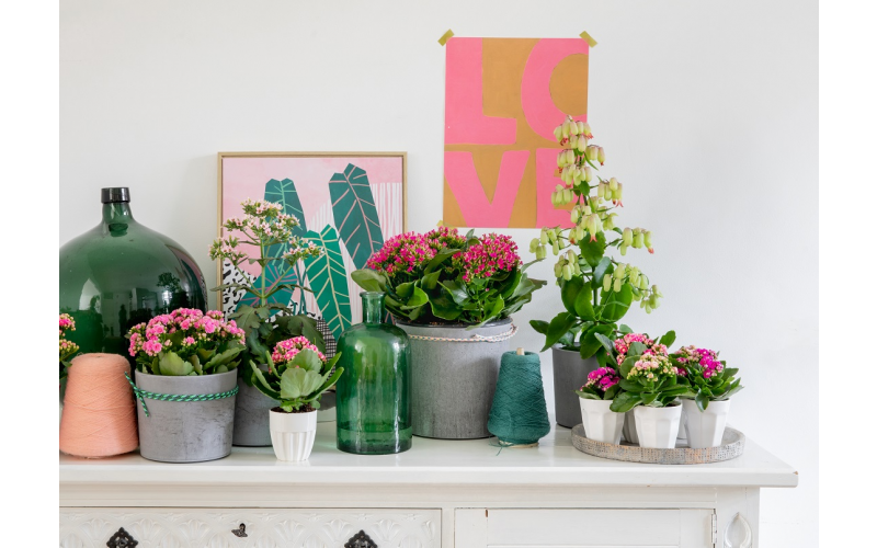 Win! £50 worth of colourful spring houseplants to beat the lockdown blues!
