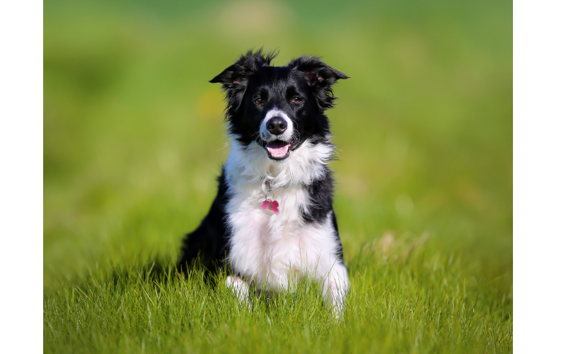 WIN a Family Ticket to Crufts, with EUKANUBA