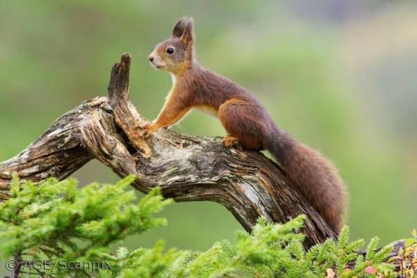 hvad spiser egern