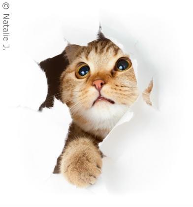nuttede katte