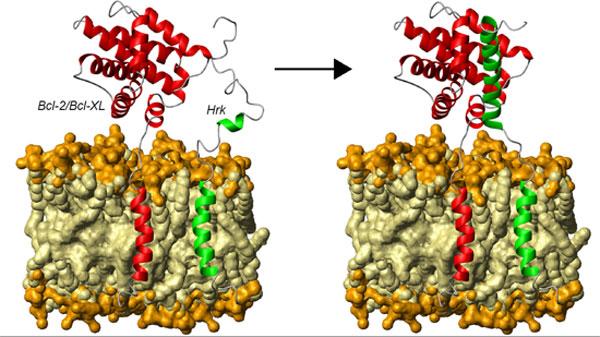 Proteínas Desordenadas Y Su Incidencia En La Salud Una