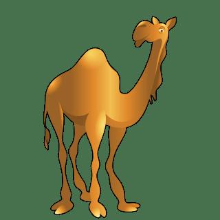 Camel (Orange)