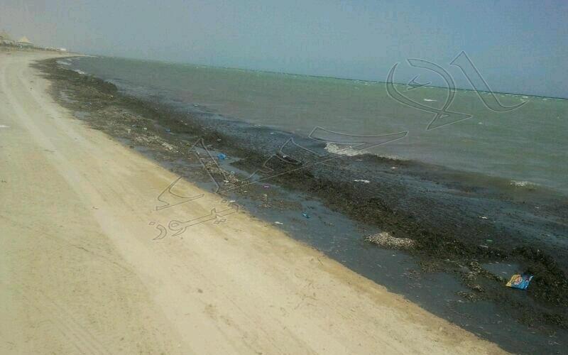شاطئ العقير