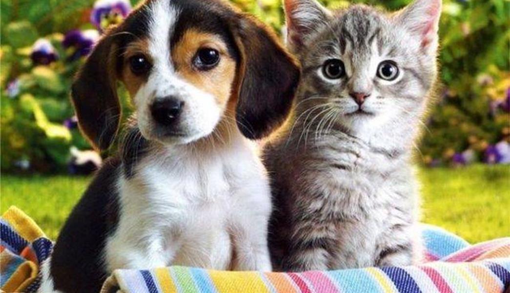 تربية القطط والكلاب