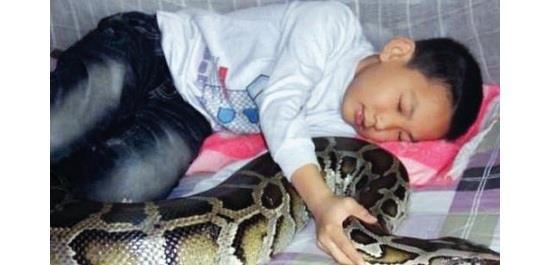 الطفل الصيني في فراشه مع الثعبان