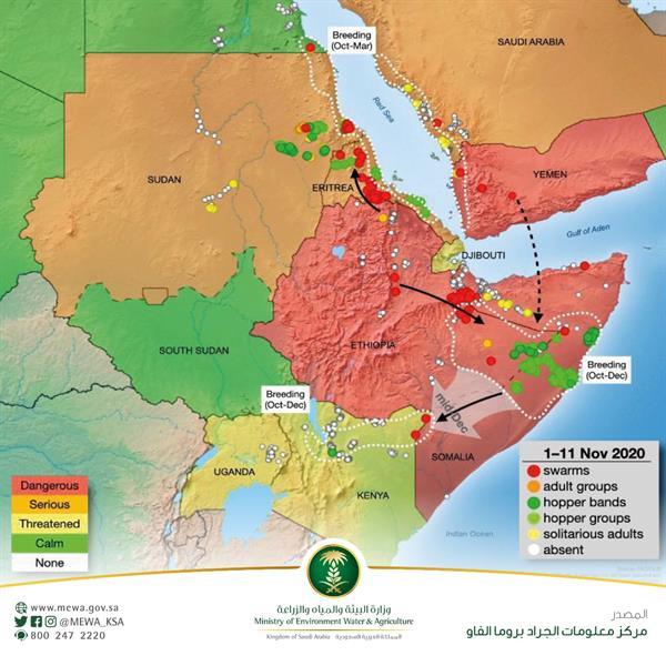 """""""البيئة"""" تحذر من انتقال أسراب الجراد من سواحل إفريقيا الشرقية نحو المملكة"""