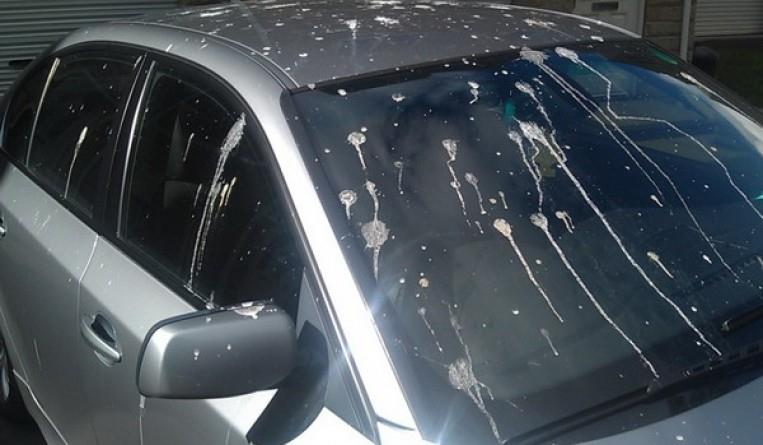 نصائح لحماية طلاء سيارتك من الخدوش وفضلات الطيور