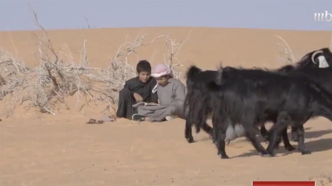 أطفال بحائل يجمعون بين رعي الماشية والتعليم عن بعد