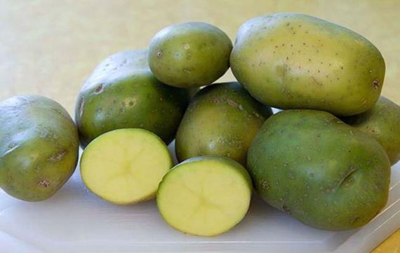 البطاطس الخضراء