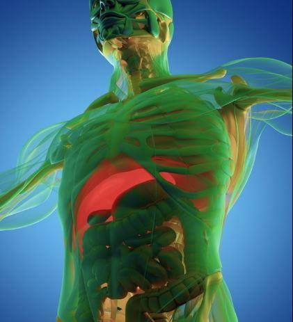 مراحل يمر بها جسم الإنسان 219f68fc-a162-4487-8