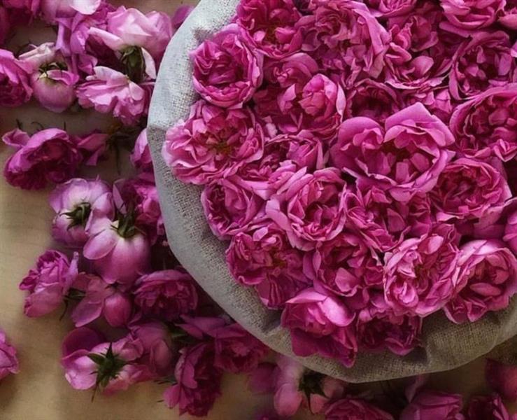 دارة الملك عبدالعزيز تعلن عن جائزة لأفضل دراسة تاريخية لزراعة الورد الطائفي