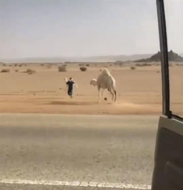 """فيديو مضحك لشاب سعودي يختطف """"حاشي"""" أمام والدته لإبعادهم عن الطريق"""