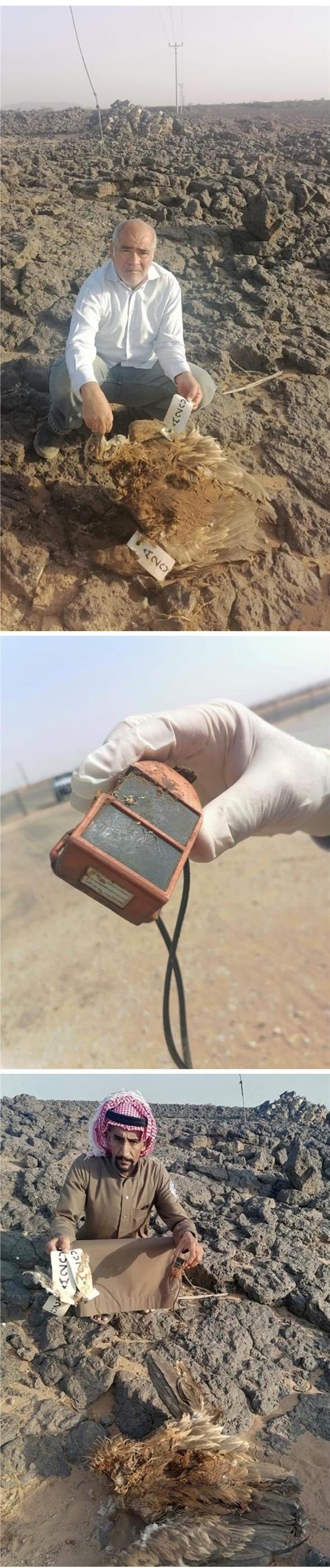 استرجاع جهاز تتبع فضائي لمسارات الهجرة من نسر أسمر